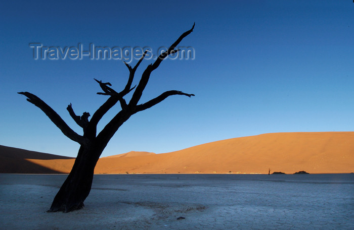 namibia125: Namib desert - Deadvlei - Hardap region, Namibia: single silhoutted dead tree, dune backdrop - photo by B.Cain - (c) Travel-Images.com - Stock Photography agency - Image Bank