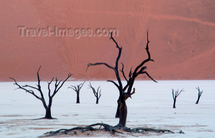 namibia126: Namib desert - Deadvlei - Hardap region, Namibia: dead trees on dry salt pan - photo by B.Cain - (c) Travel-Images.com - Stock Photography agency - Image Bank
