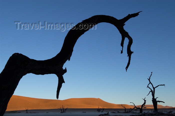 namibia128: Namib desert - Deadvlei / Death Valley - Hardap region, Namibia: sihouetted dead branch - photo by B.Cain - (c) Travel-Images.com - Stock Photography agency - Image Bank
