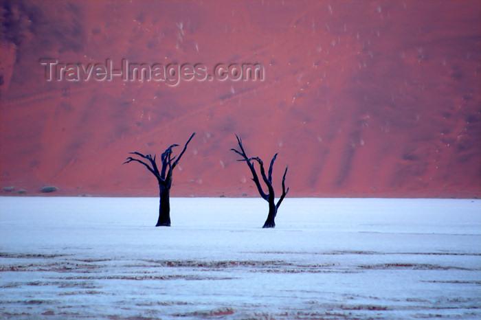namibia130: Namib desert - Deadvlei - Hardap region, Namibia: Deadvlei Two dead trees on salt pan, dune backdrop - photo by B.Cain - (c) Travel-Images.com - Stock Photography agency - Image Bank