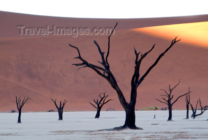 namibia131: Namib desert - Deadvlei - Hardap region, Namibia: dead trees on salt pan, sun just rising - photo by B.Cain - (c) Travel-Images.com - Stock Photography agency - Image Bank