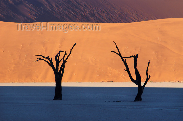 namibia133: Namib desert - Deadvlei - Hardap region, Namibia: Two dead trees, muti-colored layers pan & dunes - photo by B.Cain - (c) Travel-Images.com - Stock Photography agency - Image Bank