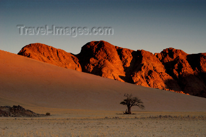 namibia134: Namibia: Desert at dusk, lone tree, mountains near Sossusvlei - photo by B.Cain - (c) Travel-Images.com - Stock Photography agency - Image Bank