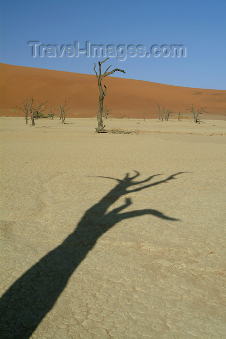 namibia16: Namib desert - Deadvlei / Dead Vlei - Hardap region, Namibia: shadows - trunk - photo by J.Banks - (c) Travel-Images.com - Stock Photography agency - Image Bank