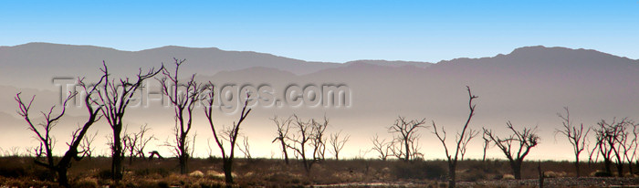 namibia169: Namib desert - Deadvlei - Hardap region, Namibia: Panorama of dead trees and background dust from cars, near Sossusvlei - photo by B.Cain - (c) Travel-Images.com - Stock Photography agency - Image Bank