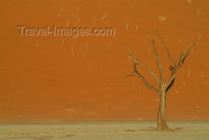 namibia17: Namib desert - Deadvlei - Hardap region, Namibia: dead tree on red sand - photo by J.Banks - (c) Travel-Images.com - Stock Photography agency - Image Bank