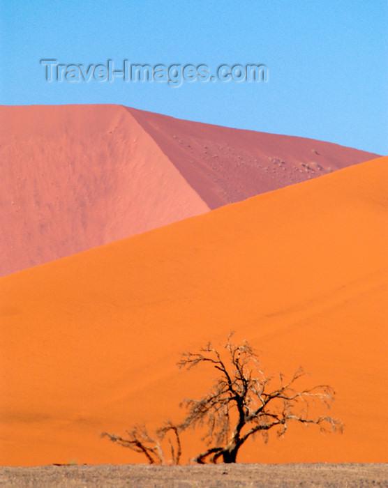 namibia172: Namib Desert - near Sossusvlei, Hardap region, Namibia, Africa: Pink & orangesand dunes with tree - photo by B.Cain - (c) Travel-Images.com - Stock Photography agency - Image Bank