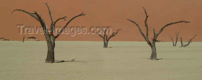 namibia18: Namib desert - Deadvlei - Hardap region, Namibia: 400 year old dead trees - photo by J.Banks - (c) Travel-Images.com - Stock Photography agency - Image Bank