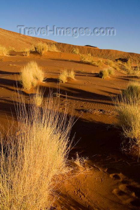 namibia195: Namib Desert - Sossusvlei, Hardap region, Namibia: dunes at sunrise - Namib-Naukluft National Park - photo by Sandia - (c) Travel-Images.com - Stock Photography agency - Image Bank
