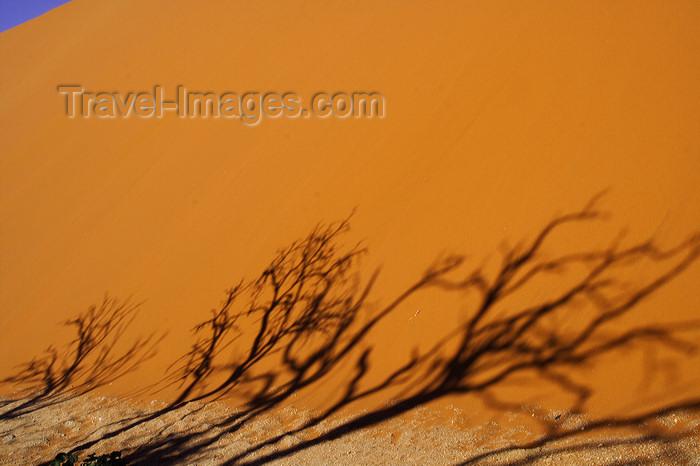 namibia207: Namib Desert - Sossusvlei, Hardap region, Namibia: tree silhouettes - photo by Sandia - (c) Travel-Images.com - Stock Photography agency - Image Bank