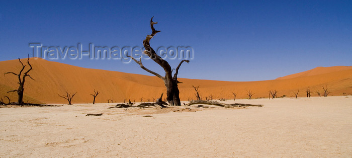 namibia209: Namib Desert - Dead Vlei, Hardap region, Namibia: surrealistic view - dead trees - photo by Sandia - (c) Travel-Images.com - Stock Photography agency - Image Bank
