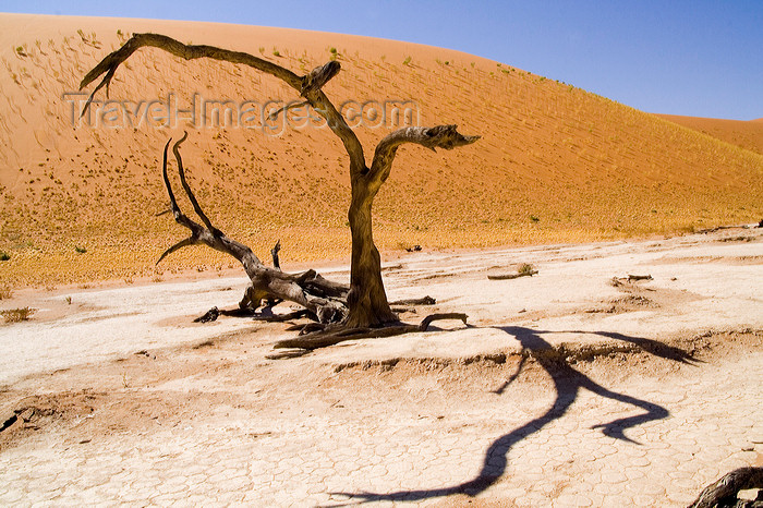namibia210: Namib Desert - Dead Vlei, Hardap region, Namibia: dead trees-some of them are 500 years old - photo by Sandia - (c) Travel-Images.com - Stock Photography agency - Image Bank