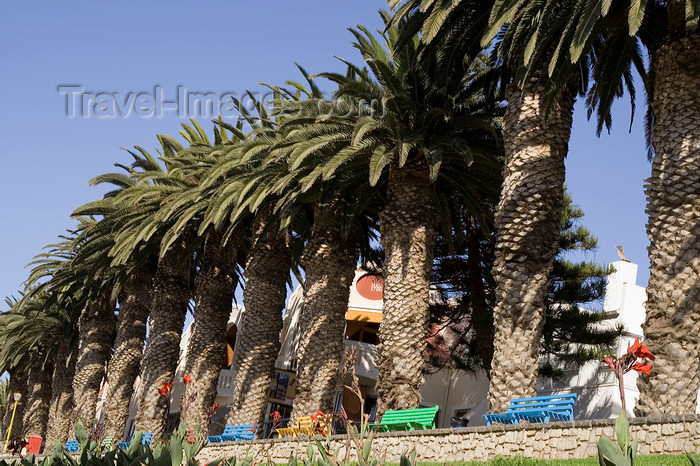 namibia221: Swakopmund, Erongo region, Namibia: line of palm trees in the town centre - place for relaxation, near the souvenir market - photo by Sandia - (c) Travel-Images.com - Stock Photography agency - Image Bank