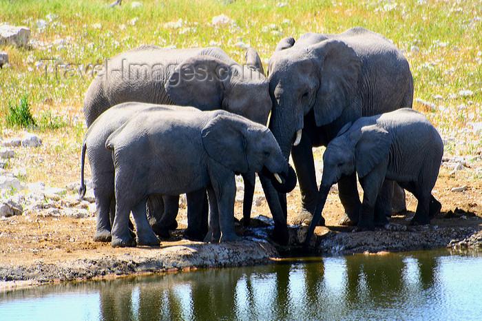 namibia235: Etosha Park, Kunene region, Namibia: Elephants at a waterhole - Loxodonta africana - photo by Sandia - (c) Travel-Images.com - Stock Photography agency - Image Bank