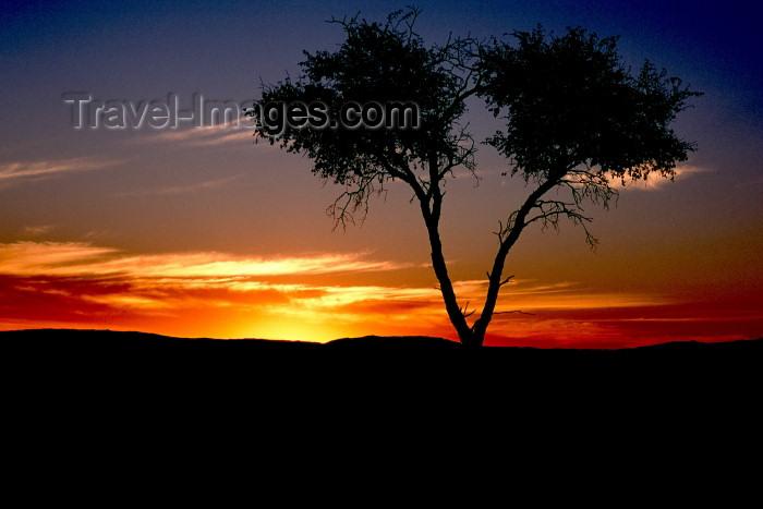 namibia3: Namibia, Africa - Etosha Park, Kunene region: sunset - tree silhouette - photo by G.Friedman - (c) Travel-Images.com - Stock Photography agency - Image Bank