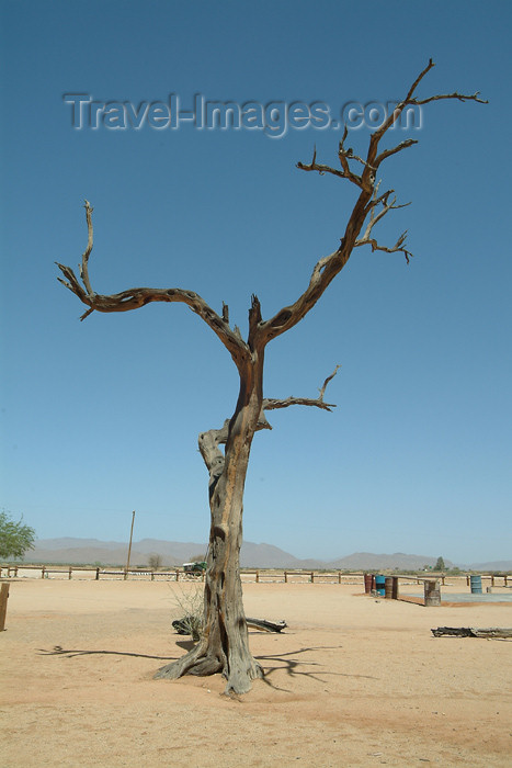 namibia30: Namibia - Solitaire, Hardap region: a lone tree - photo by J.Banks - (c) Travel-Images.com - Stock Photography agency - Image Bank
