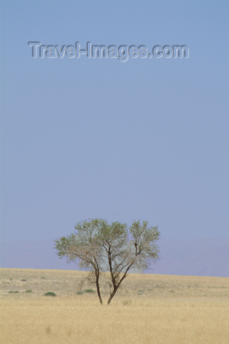 namibia32: Namibia: solitary tree on the plain - photo by J.Banks - (c) Travel-Images.com - Stock Photography agency - Image Bank