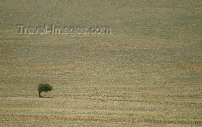 namibia33: Namibia: solitary tree on the pass - photo by J.Banks - (c) Travel-Images.com - Stock Photography agency - Image Bank