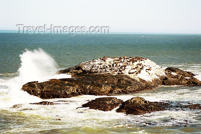 namibia51: Africa - Namibia - Lüderitz - Angra Pequena - Dias Cross - Diaz Point: islet - seal colony - photo by J.Stroh - (c) Travel-Images.com - Stock Photography agency - Image Bank