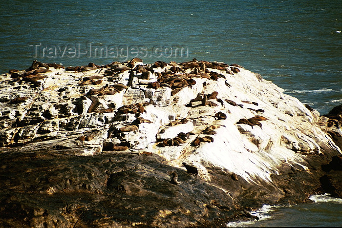 namibia52: Namibia - Lüderitz - Dias Cross: seals bask in the sun - photo by J.Stroh - (c) Travel-Images.com - Stock Photography agency - Image Bank