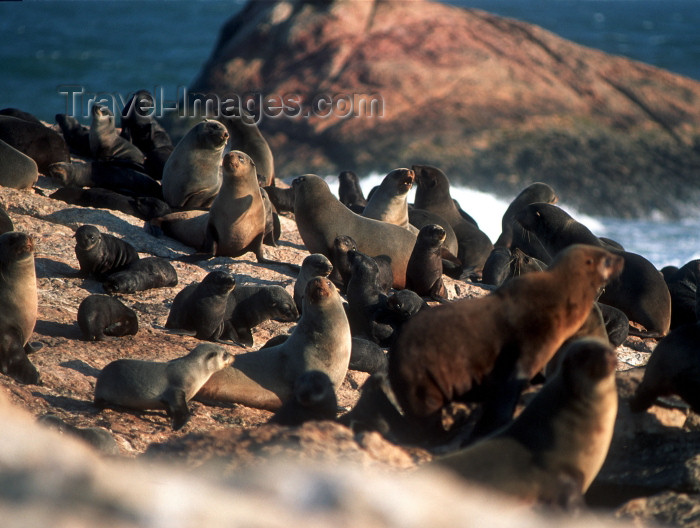 namibia77: Namibia - Luderitz - Dias Point: seal colony - photo by G.Friedman - (c) Travel-Images.com - Stock Photography agency - Image Bank