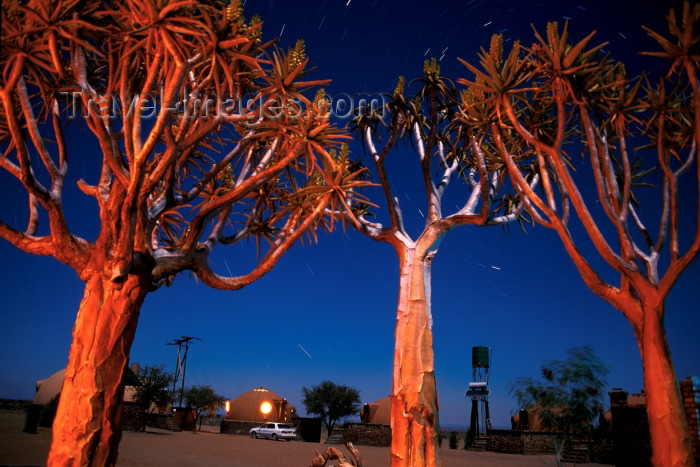 namibia87: Namibia - Keetmanshoop, Karas Region: Quiver trees at night - aloe dichotoma - Quiver Tree Forest - photo by G.Friedman - (c) Travel-Images.com - Stock Photography agency - Image Bank