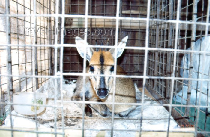 nigeria26: Nigeria - Lagos / LOS: bush meat - caged Bambi - Lekki market - photo by Dolores CM - (c) Travel-Images.com - Stock Photography agency - Image Bank