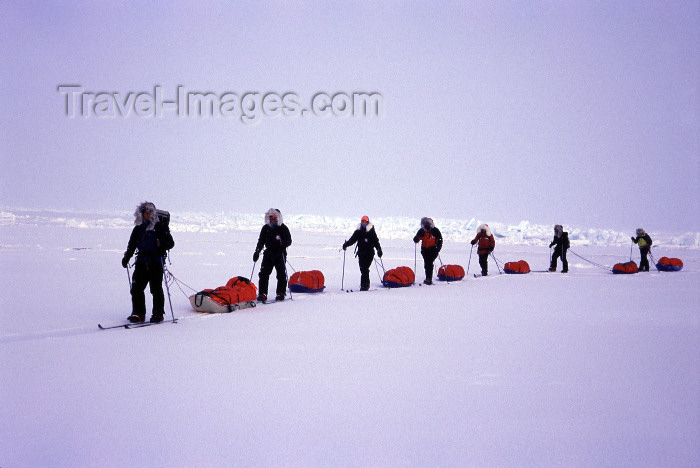 north-pole6: Arctic Ocean: team skis north to the Pole towing sleds - line of skiers - Polar expedition (photo by Eric Philips) - (c) Travel-Images.com - Stock Photography agency - Image Bank