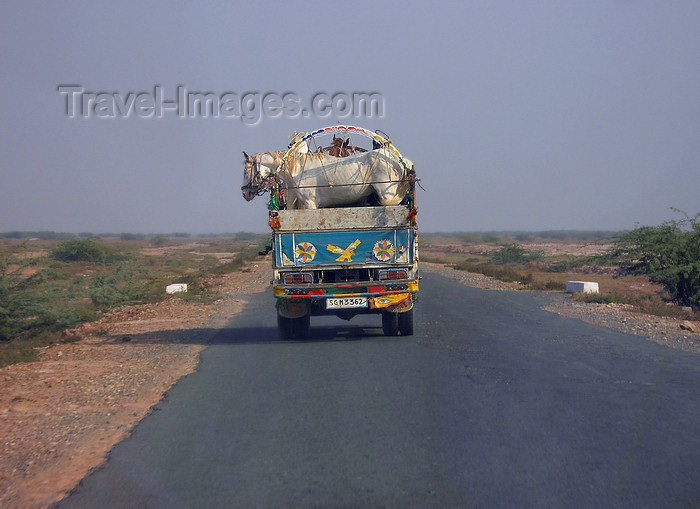 pakistan150: Punjab, Pakistan: horse transportation - photo by D.Steppuhn - (c) Travel-Images.com - Stock Photography agency - Image Bank