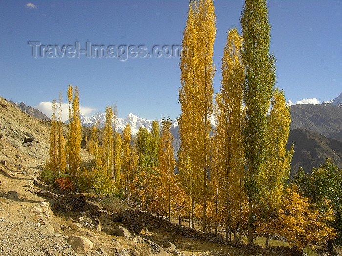 pakistan181: Duikar hamlet, Altit - Northern Areas, Pakistan: trees and the Hunza valley - photo by D.Steppuhn - (c) Travel-Images.com - Stock Photography agency - Image Bank