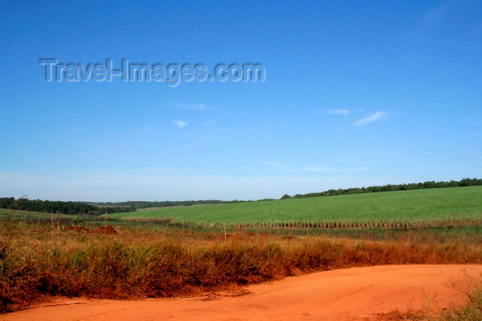 paraguay9: Department of Paraguari, Paraguay: sugar cane plantation - agriculture - photo by A.Chang - (c) Travel-Images.com - Stock Photography agency - Image Bank