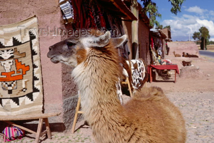 peru132: Cuzco, Peru: llama in the city, near market stalls - photo by C.Lovell - (c) Travel-Images.com - Stock Photography agency - Image Bank