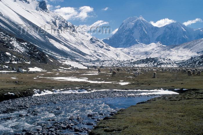peru158: Ausangate massif, Cuzco region, Peru: the Jampamayo river and alpaca herd, below Senal Nevado Tres Picos - Auzangate trek- Peruvian Andes - photo by C.Lovell - (c) Travel-Images.com - Stock Photography agency - Image Bank