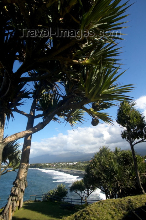 reunion100: Réunion - Pointe Bourbier: looking down - pandanus  - photo by Y.Guichaoua - (c) Travel-Images.com - Stock Photography agency - Image Bank
