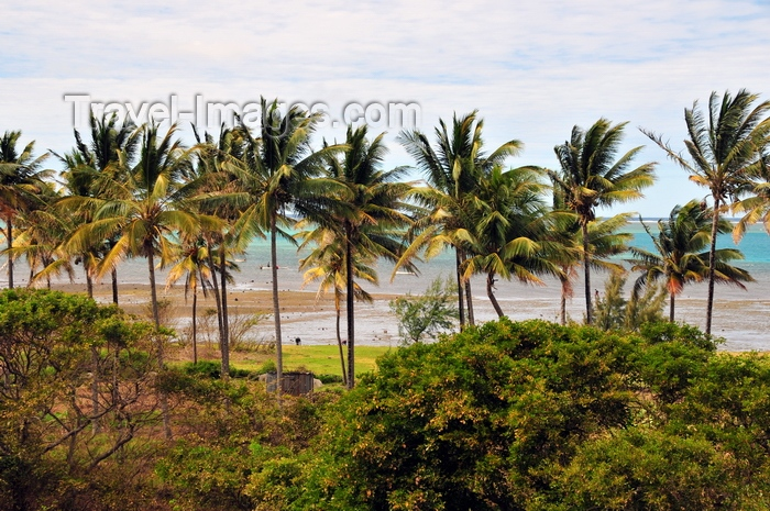 rodrigues18: Anse Mourouk, Rodrigues island, Mauritius: line of coconut trees by the coast - photo by M.Torres - (c) Travel-Images.com - Stock Photography agency - Image Bank