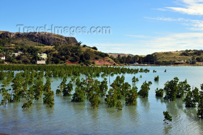 rodrigues70: Baie du Nord, Rodrigues island, Mauritius: mangrove and coastal road - photo by M.Torres - (c) Travel-Images.com - Stock Photography agency - Image Bank