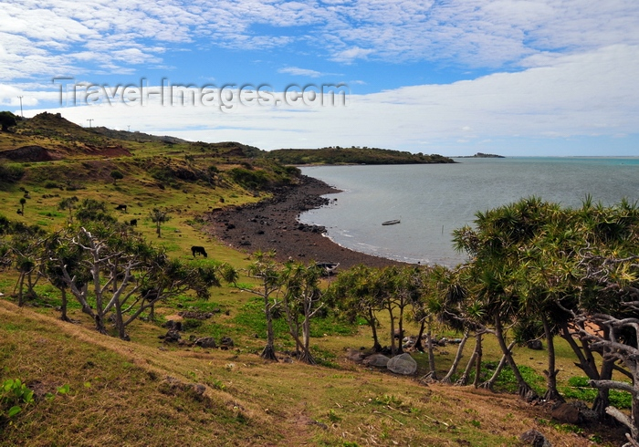 rodrigues8: Anse Tamarin, Rodrigues island, Mauritius: beach with dark rocks, cows and vacoas trees - Pointe Tamarin - photo by M.Torres - (c) Travel-Images.com - Stock Photography agency - Image Bank