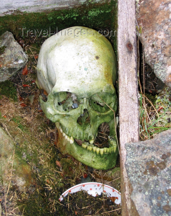russia748: Wrangel Island / ostrov Vrangelya, Chukotka AOk, Russia: human skull - old bones on the ground - photo by R.Eime - (c) Travel-Images.com - Stock Photography agency - Image Bank