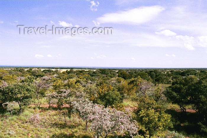 safrica110: South Africa - Modimole: bushveld view - sub-tropical woodland - photo by J.Stroh - (c) Travel-Images.com - Stock Photography agency - Image Bank