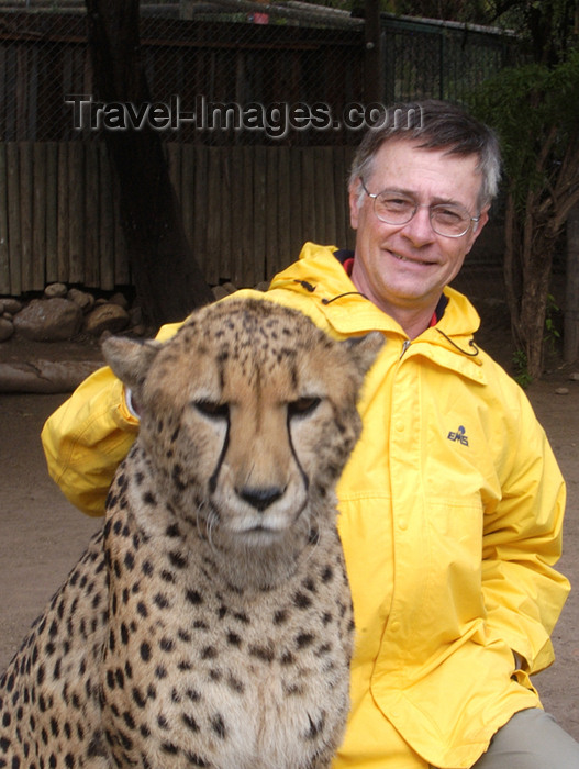 safrica162: South Africa - Petting a Cheetah, big cats rehab ctr, Oudtshoorn - photo by B.Cain - (c) Travel-Images.com - Stock Photography agency - Image Bank