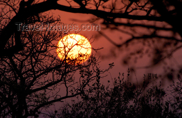 safrica184: South Africa - South Africa Sunset through tree branches, Singita - photo by B.Cain - (c) Travel-Images.com - Stock Photography agency - Image Bank
