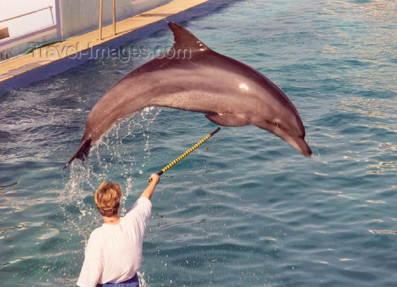 safrica37: South Africa - Port Elizabeth / PLZ: dolphins can fly - the oceanarium (at the Snake Park) - photo by M.Torres - (c) Travel-Images.com - Stock Photography agency - Image Bank