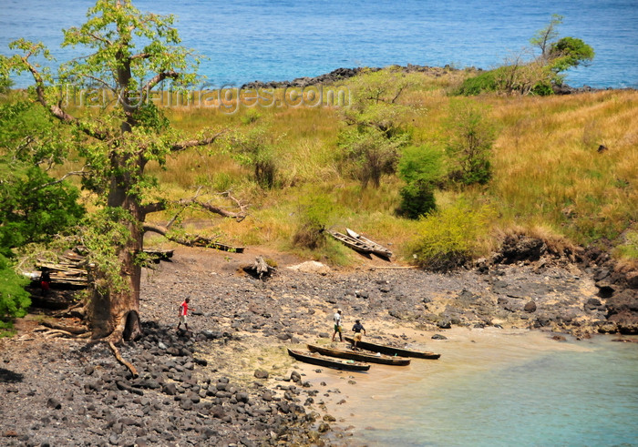 sao-tome149: Lagoa Azul, Lobata district, São Tomé and Príncipe / STP: beach and fishing boats under a giant baobab tree / praia e barcos de pesca debaixo de um embondeiro gigante - dongos - photo by M.Torres - (c) Travel-Images.com - Stock Photography agency - Image Bank
