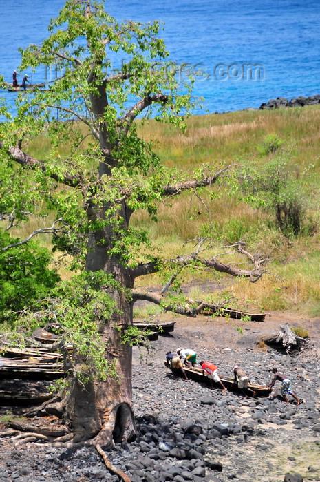 sao-tome151: Lagoa Azul, Lobata district, São Tomé and Príncipe / STP: fishermen and giant baobab tree - Adansonia digitata / embondeiro gigante e dongo - photo by M.Torres - (c) Travel-Images.com - Stock Photography agency - Image Bank