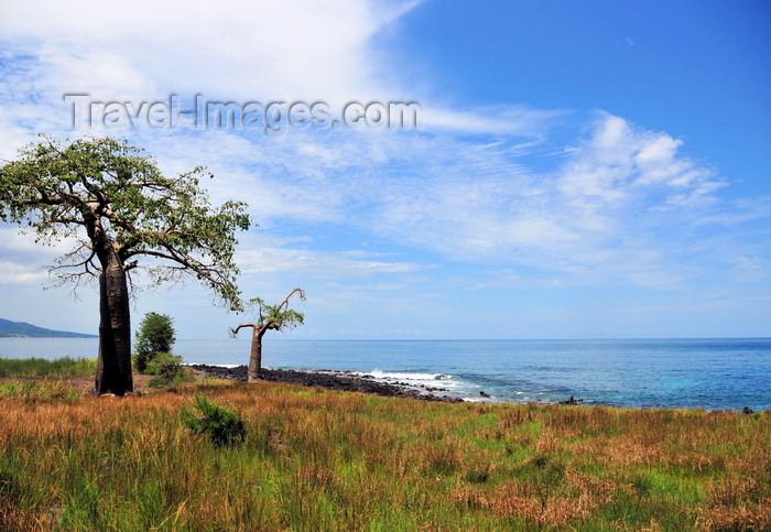 sao-tome156: Lagoa Azul, Lobata district, São Tomé and Príncipe / STP: horizon - baobab trees by the Atlantic Ocean - Adansonia digitata / horizonte - embondeiros em frente ao Oceano Atlântico - photo by M.Torres - (c) Travel-Images.com - Stock Photography agency - Image Bank