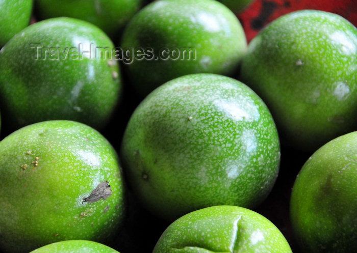 sao-tome75: São João plantation / roça São João, Caué district, São Tomé and Prícipe / STP: Passion fruit - Passiflora edulis / Maracujás - photo by M.Torres - (c) Travel-Images.com - Stock Photography agency - Image Bank