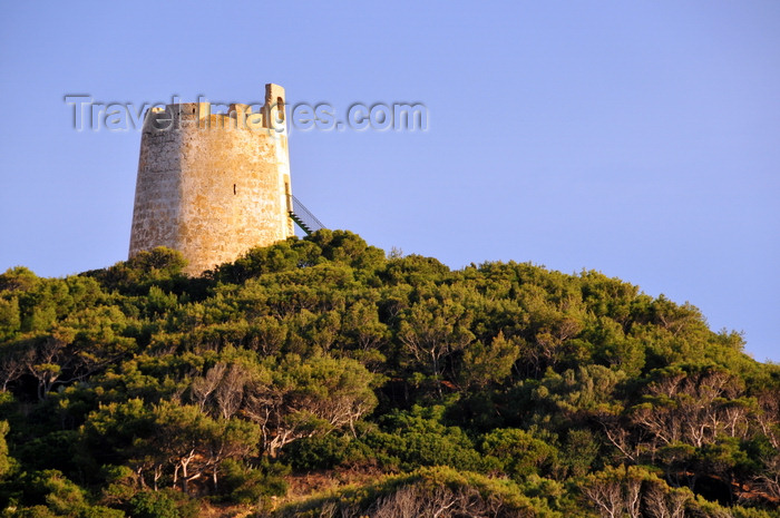 sardinia244: Baia di Chia, Domus de Maria municipality, Cagliari province, Sardinia / Sardegna / Sardigna: Aragonese tower of Chia / Bitia, near the Phoenician-Punic settlement of Bithia - 17th century watchtower atop a promontory - junipers at Capo Spartivento - photo by M.Torres - (c) Travel-Images.com - Stock Photography agency - Image Bank