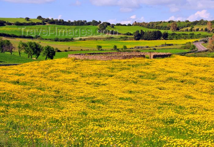 sardinia255: Isili, Cagliari province, Sardinia / Sardegna / Sardigna: field of yellow wild flowers, circular stone structure and road - Sarcidano sub-region - photo by M.Torres - (c) Travel-Images.com - Stock Photography agency - Image Bank