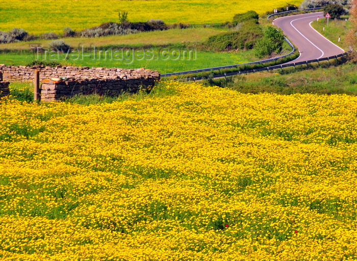 sardinia259: Isili, Cagliari province, Sardinia / Sardegna / Sardigna: wiggling road, field of yellow wild flowers and circular stone structure - Sarcidano sub-region - photo by M.Torres - (c) Travel-Images.com - Stock Photography agency - Image Bank