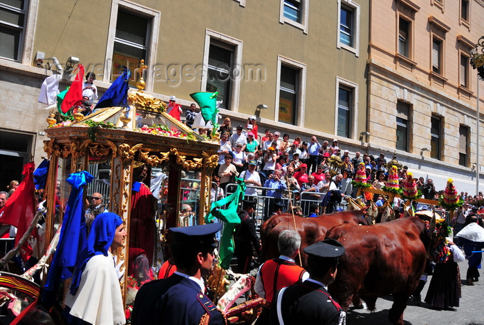 sardinia385: Cagliari, Sardinia / Sardegna / Sardigna: Feast of Sant'Efisio / Sagra di Sant'Efisio - the saint travels in a coach pulled by oxen - Via Goffredo Mameli - photo by M.Torres - (c) Travel-Images.com - Stock Photography agency - Image Bank